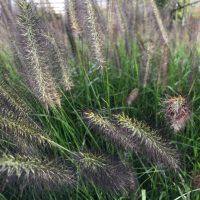 Grassen & Bamboe